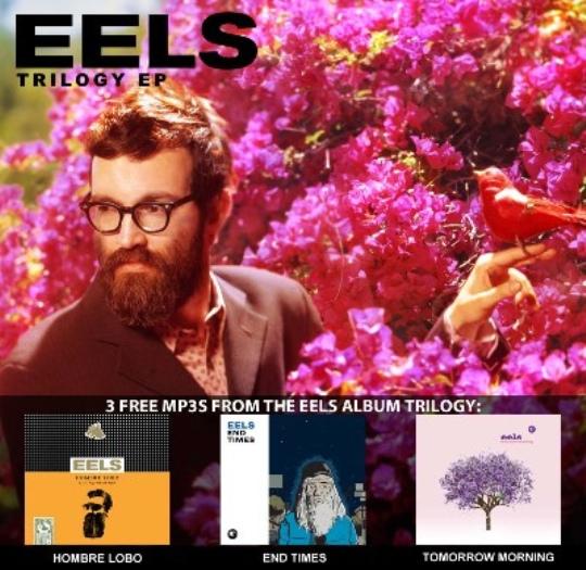 eels-free.jpg