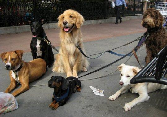 tanti-cani.jpg