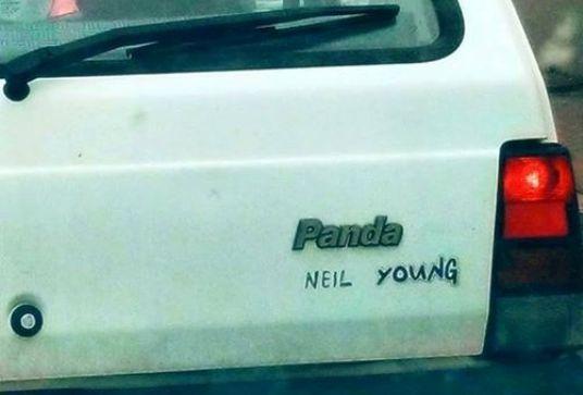 fiat-panda-neil-young.jpg